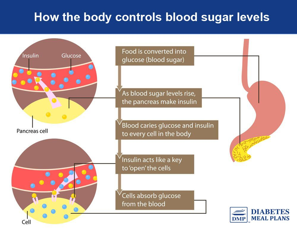 How the body controls blood sugar