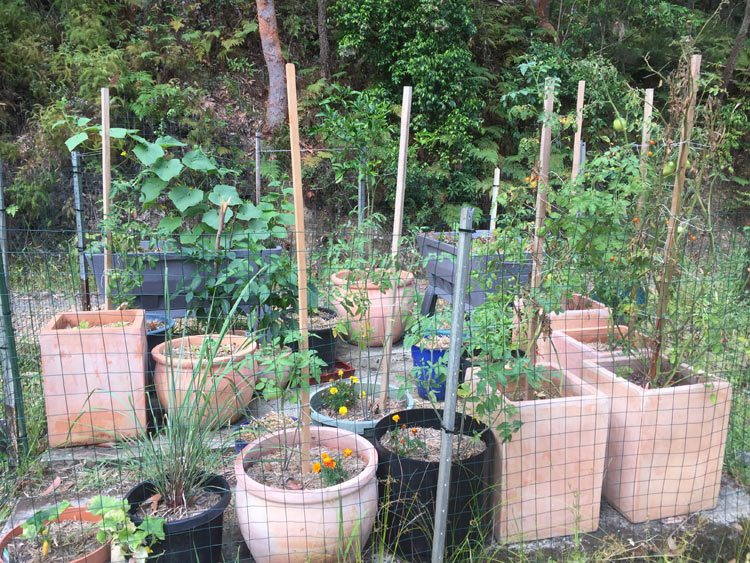 Getting Started with Growing a Vegetable Garden