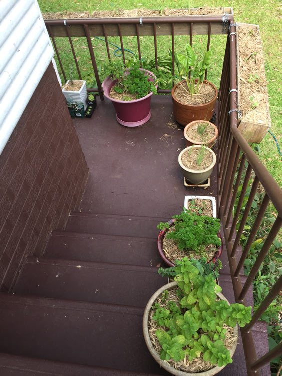 balcony garden 3