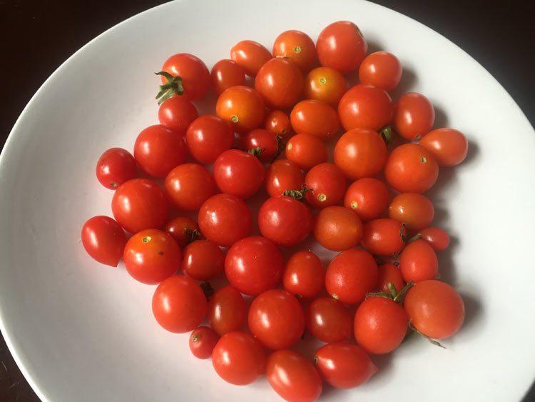 cherry tomatoes second harvest
