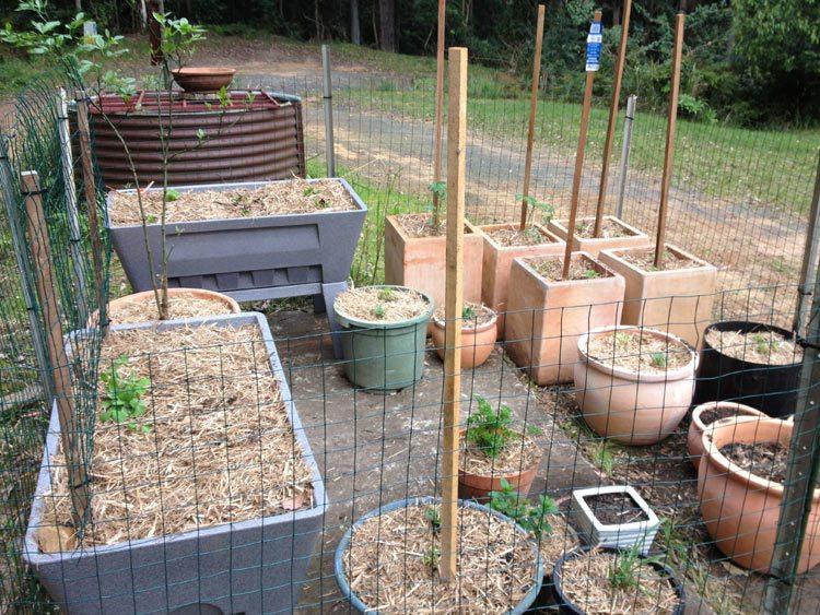 veggie garden 6