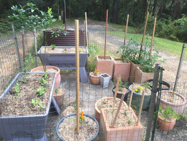 veggie garden 7