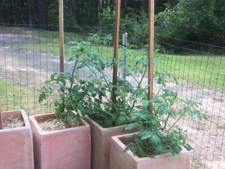 veggie garden 8