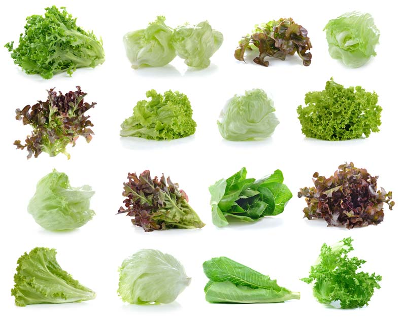 how to cut lettuce from garden