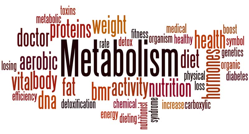 Metabolism and Metabolic Syndrome Explained