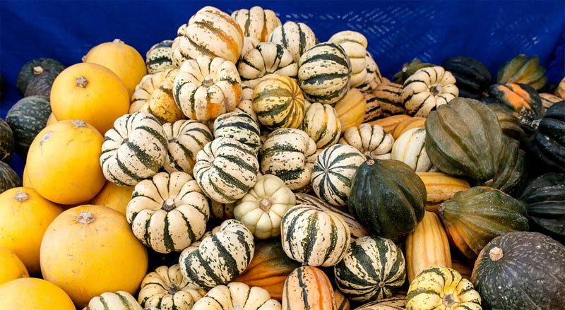 Winter Squash and Type 2 Diabetes