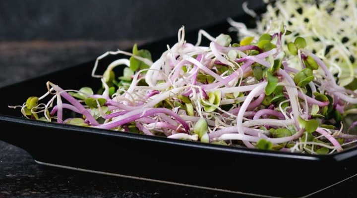 Benefits of Alfalfa & Superstar Sprouts for Type 2 Diabetes